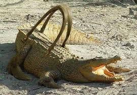 sac-croco